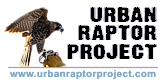 Urban Raptor Project