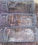 rodent traps