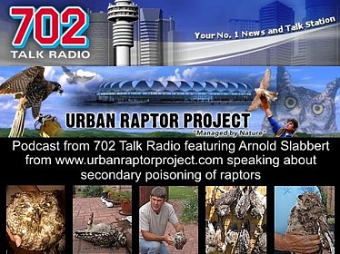 Podcast 702 Secondary Poisoning of Raptors