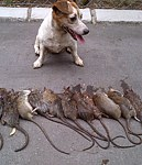 Chucky the Rat Slayer